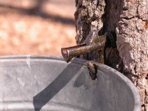 tap and bucket on tree