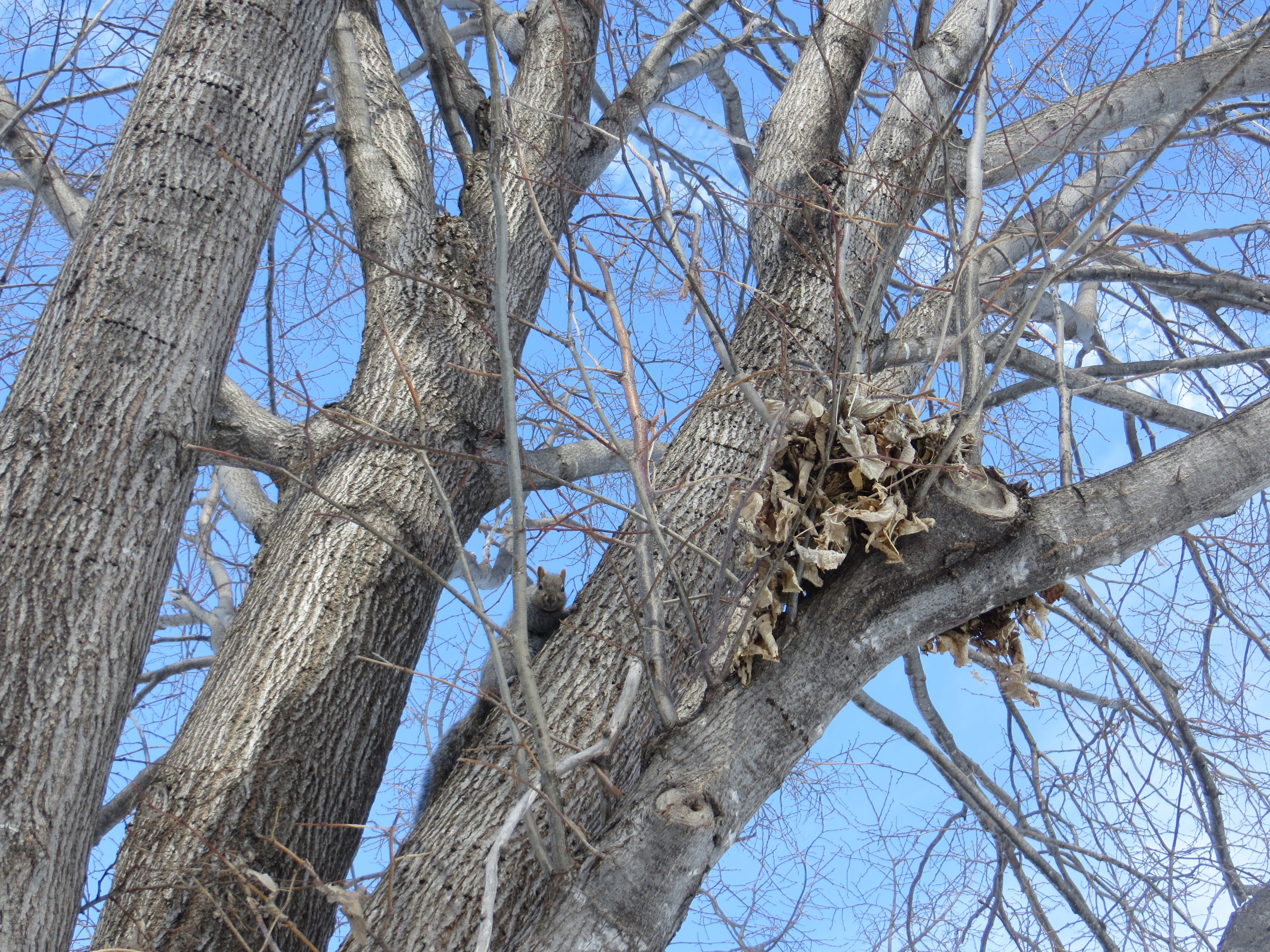 What is that Clump of Leaves in the Tree? - Posted on